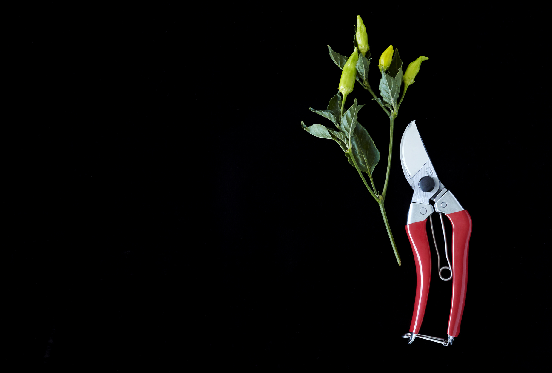 Clipper and Peppers | Product Still Life Photographer, Marshall Gordon