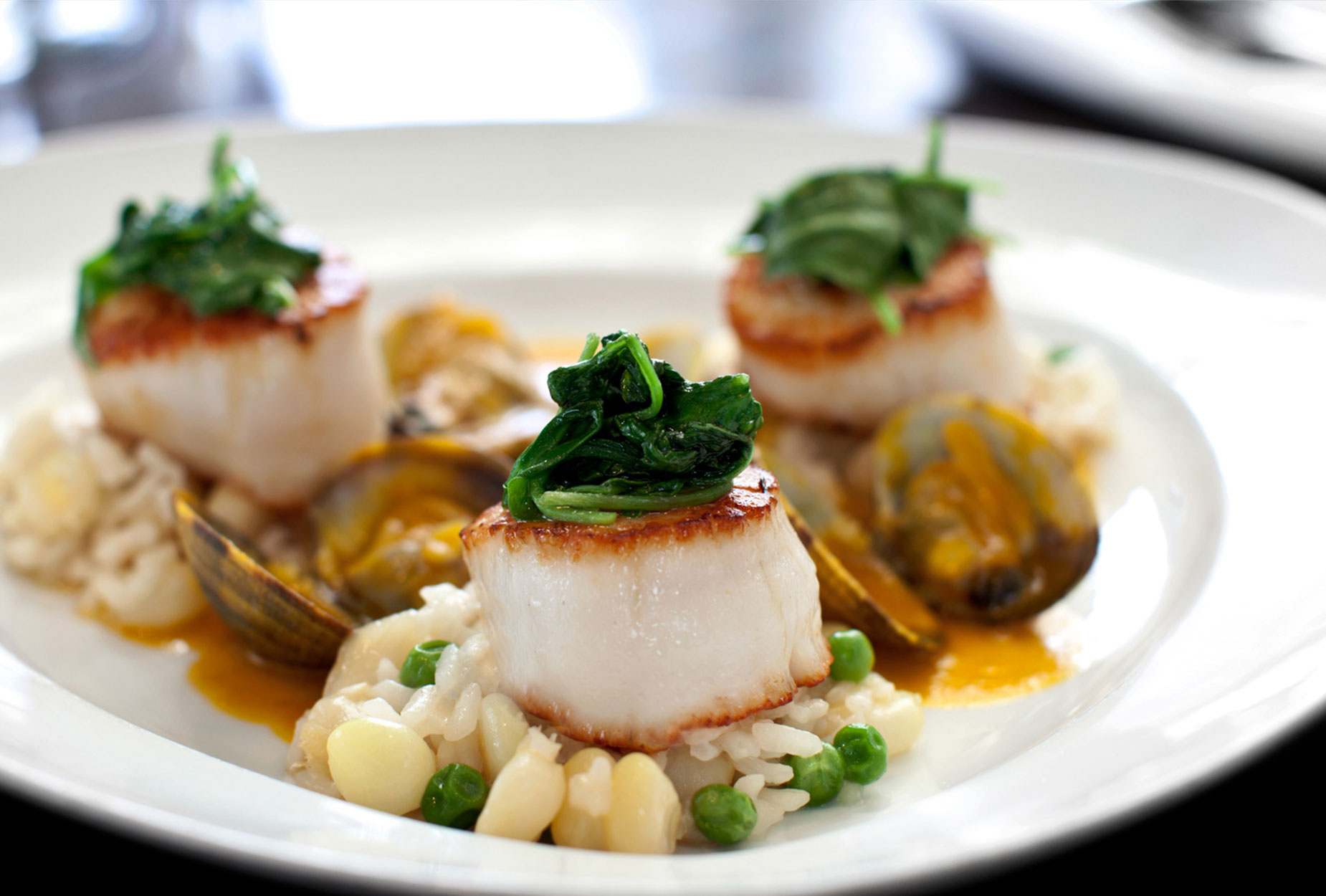 Scallops and Clams | Food Photographer, Marshall Gordon